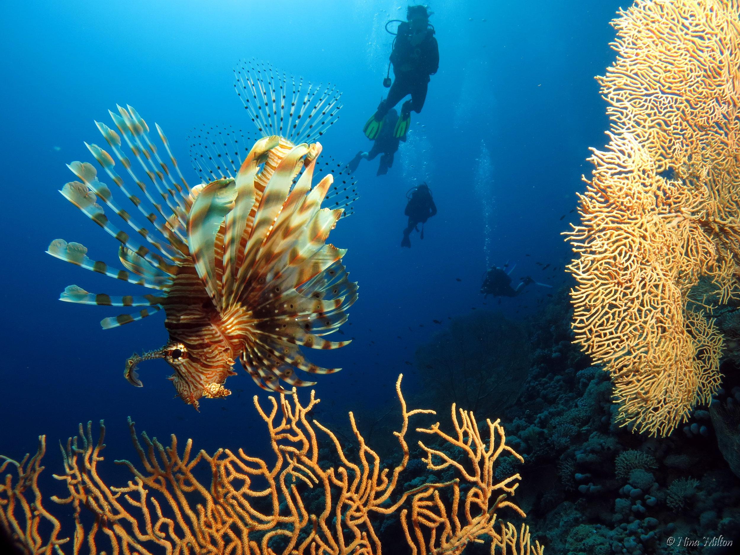 Dahab_diving_Red Sea_Egypt_Sinai_.JPG