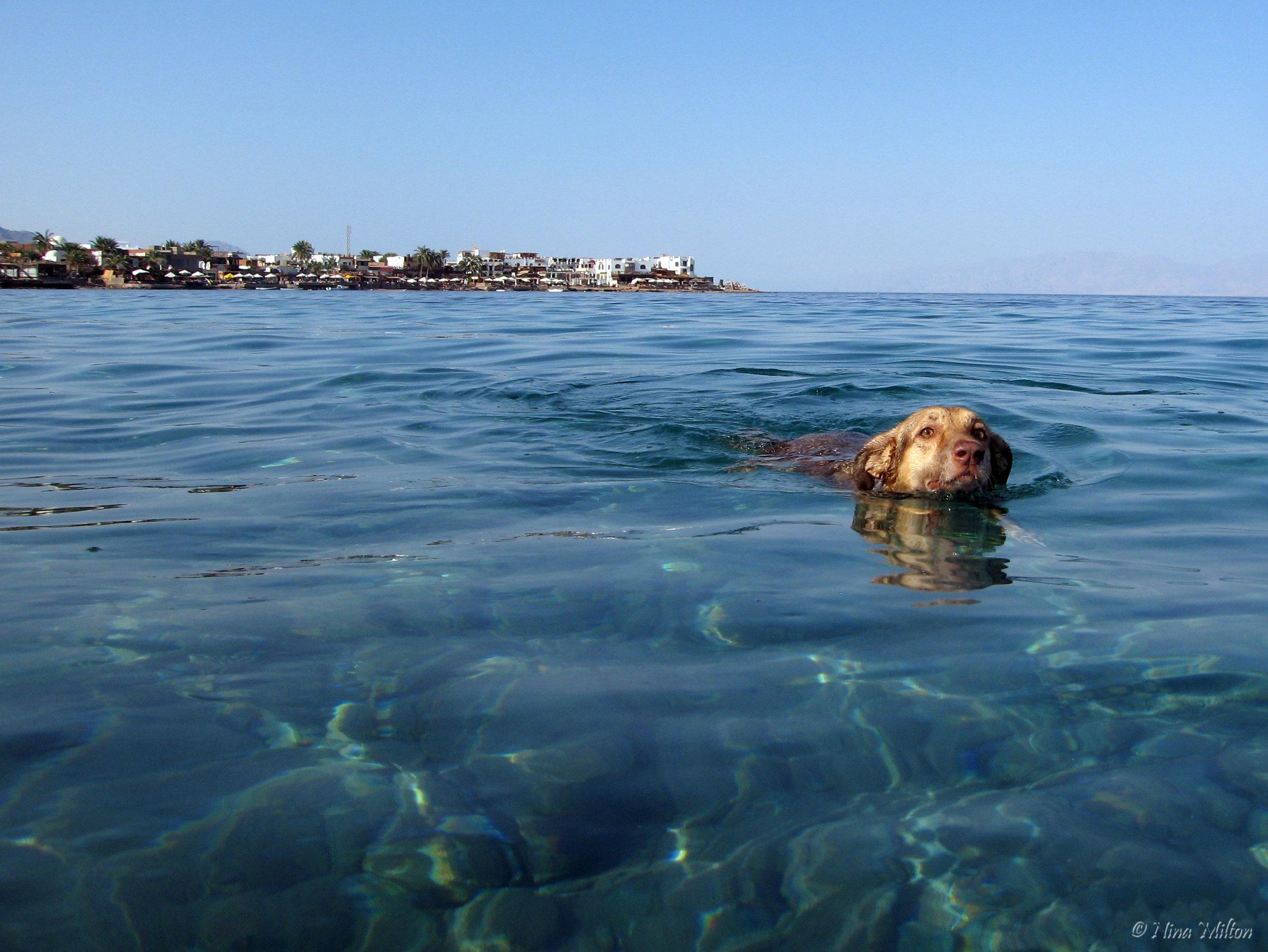 Dahab_diving_Red Sea_Egypt_Sinai_dogfish.JPG