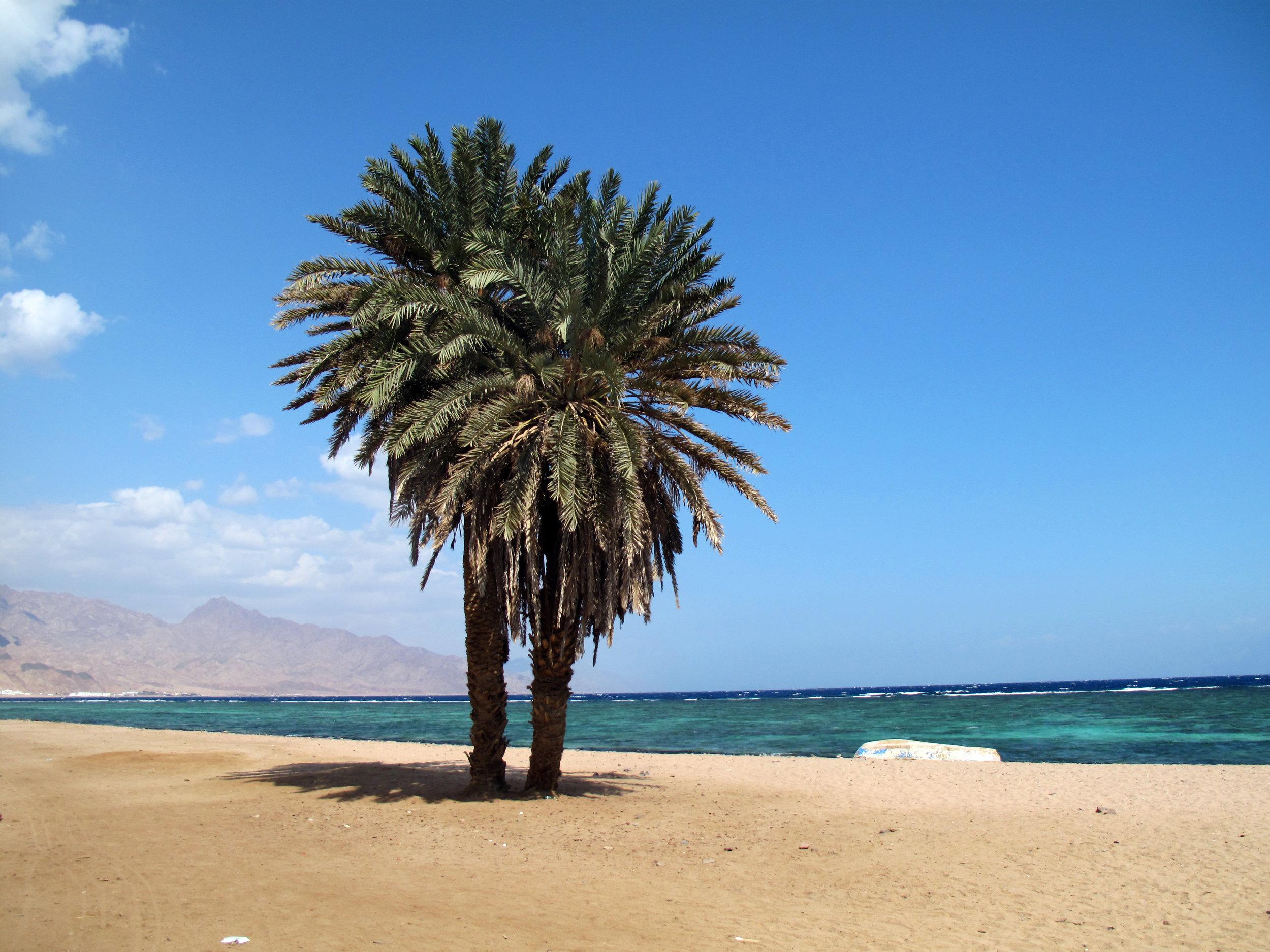 Dahab_Coachhouse_Egypt_Sinai_Red_Sea_Masbat_Bay_Assalah_3.JPG