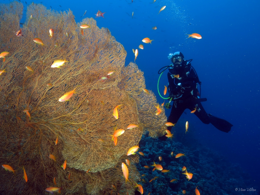 ahab_Coachhouse_Guesthouse_Sinai_Egypt_Diver.JPG
