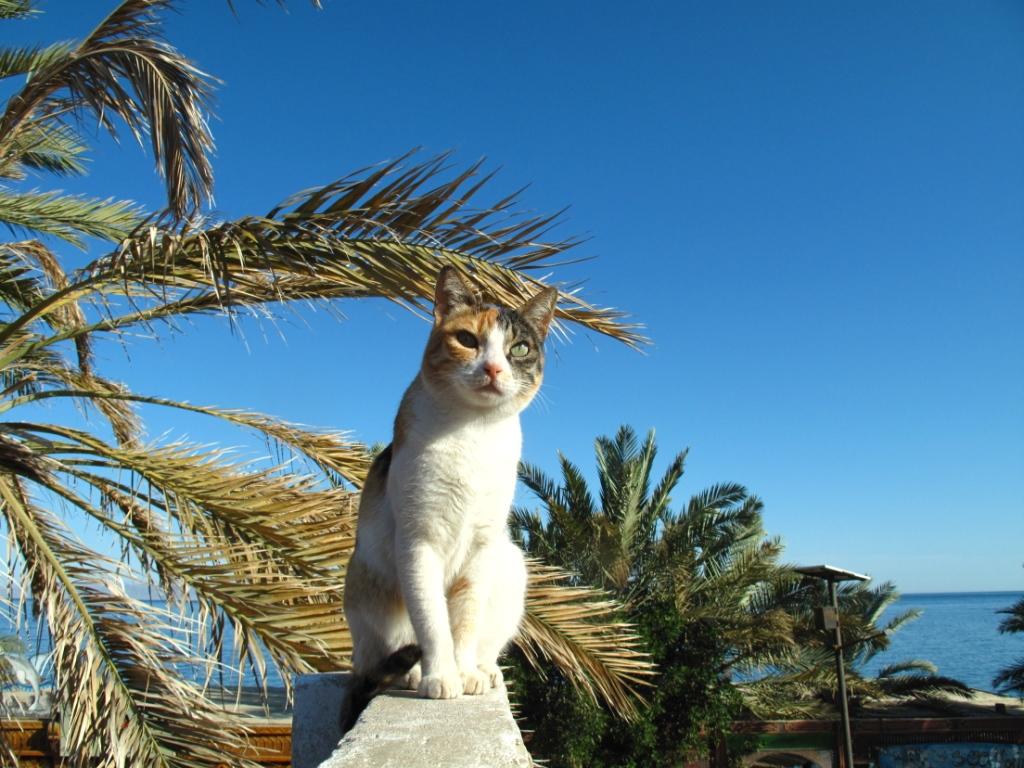 Dahab_Coachhouse_Egypt_Diving_Red_Sea_Paint_cat.JPG