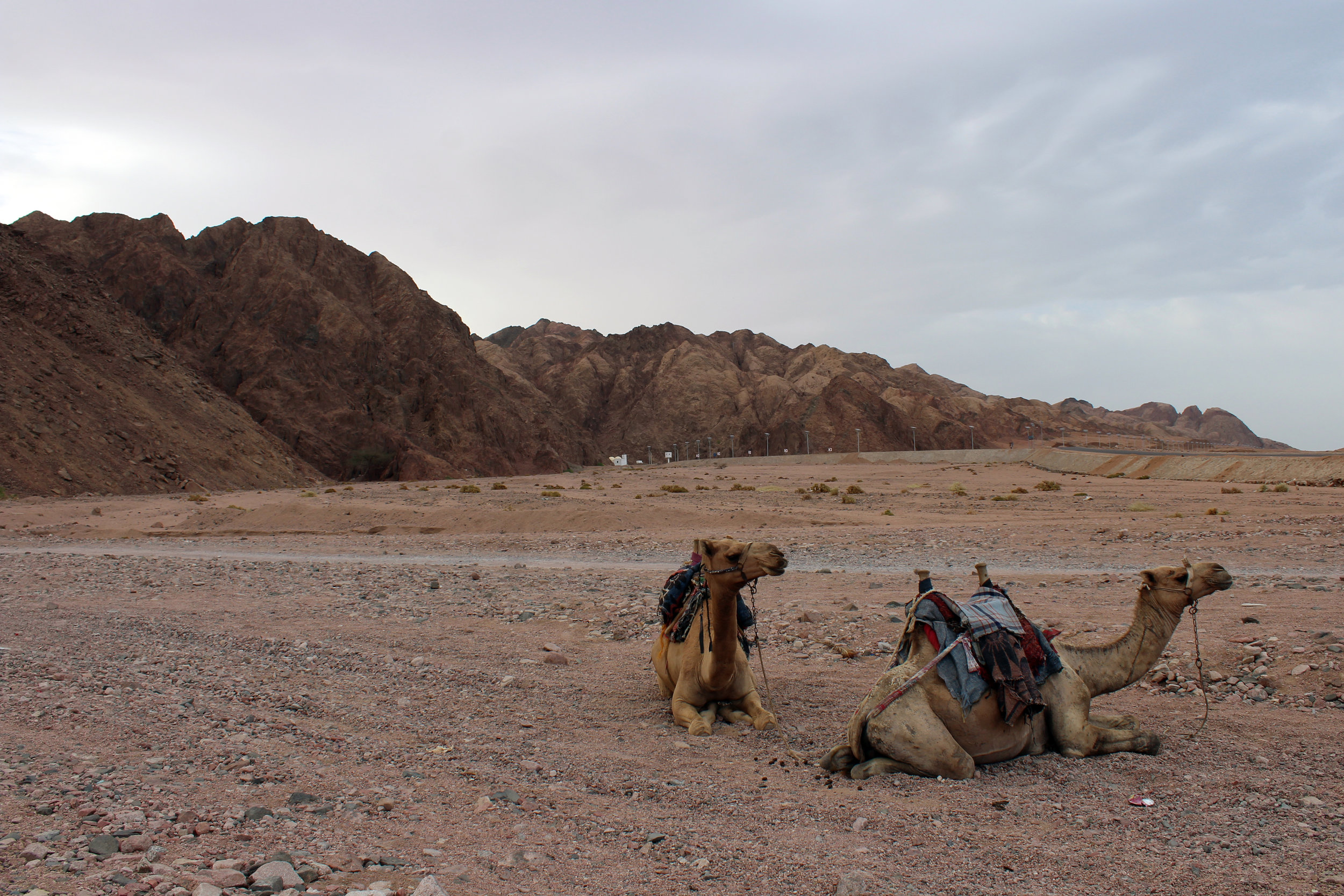 Dahab_Coachhouse_Egypt_Beach_Red_Sea_Trip_Wadi_Gnai_Camel_Ride_Mountain_Granite_.JPG