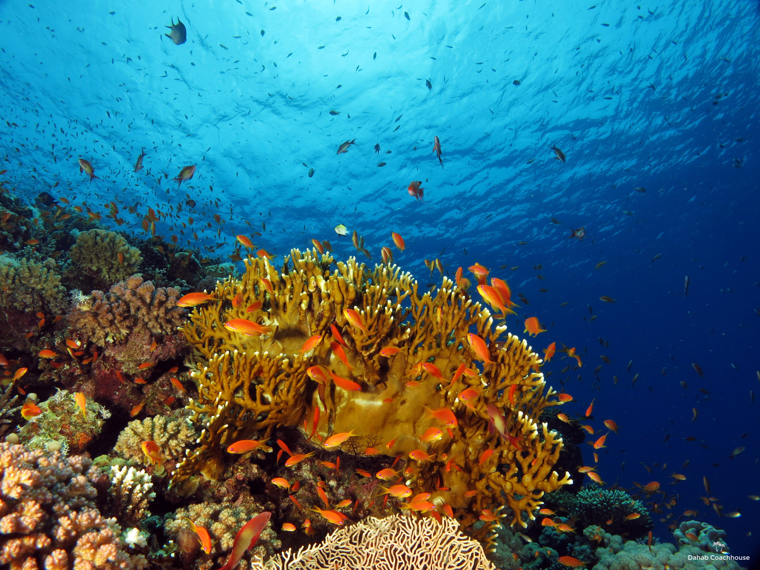 Dahab_Coachhouse_Egypt_Red_Sea_Diving_Beach_Accommodation_Holiday_Travel_Coral_reef.JPG