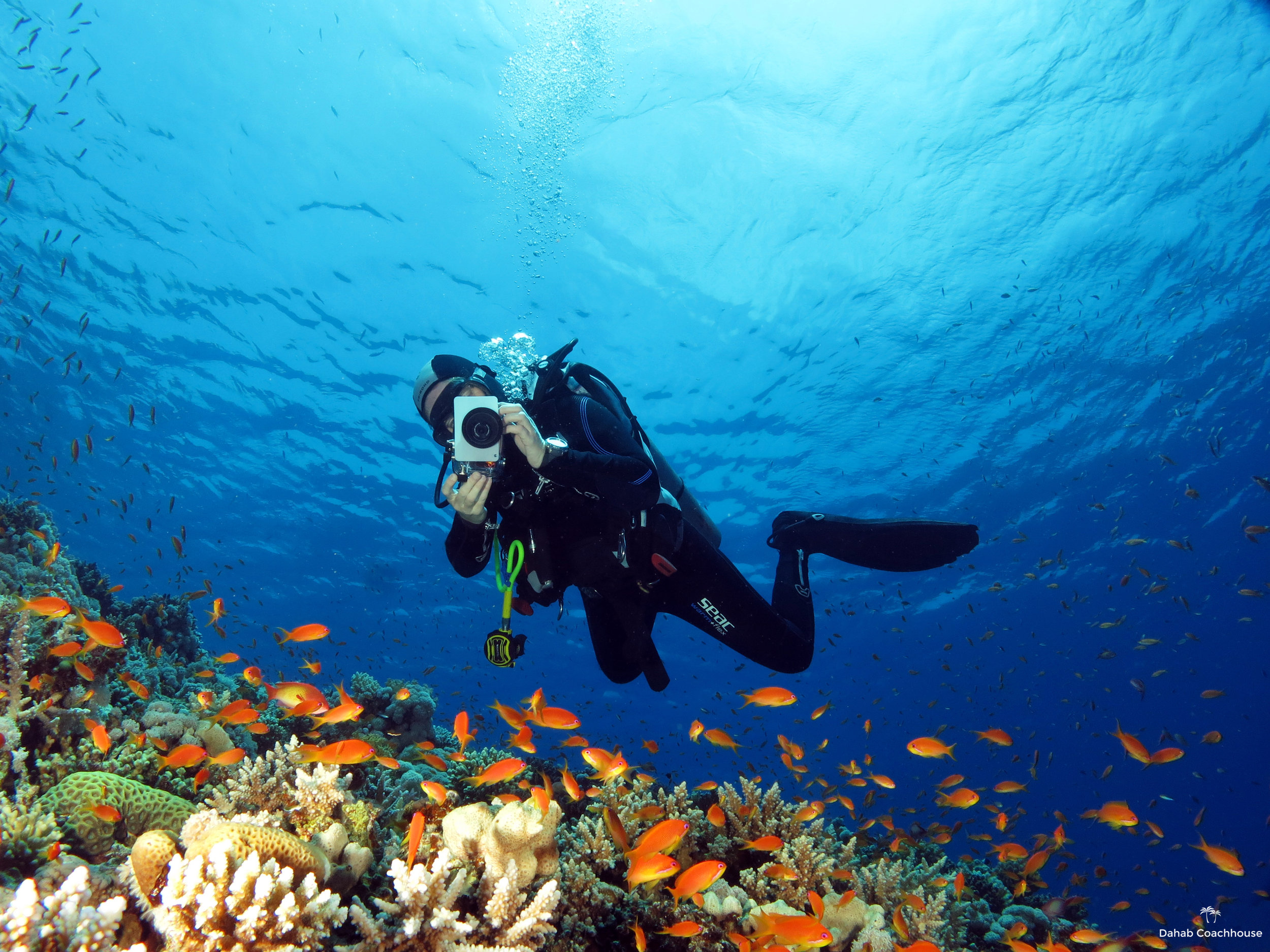 Dahab_Coachhouse_Egypt_Red_Sea_Diving_Beach_Accommodation_Holiday_Travel_Diver_Anthias.JPG