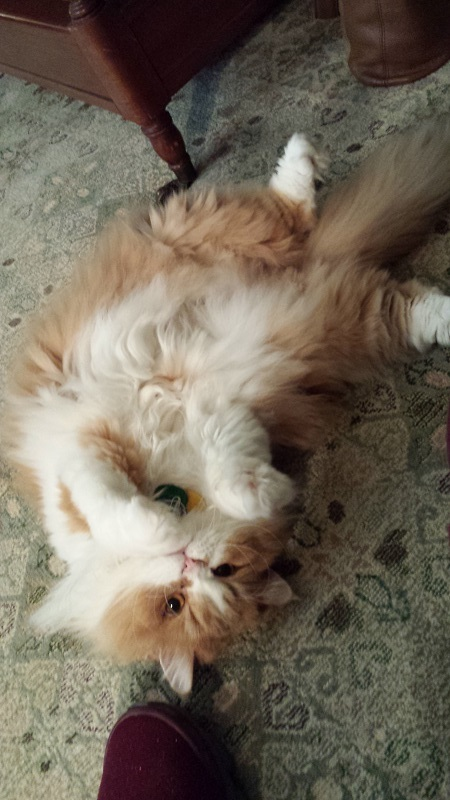 comprehensive feline care