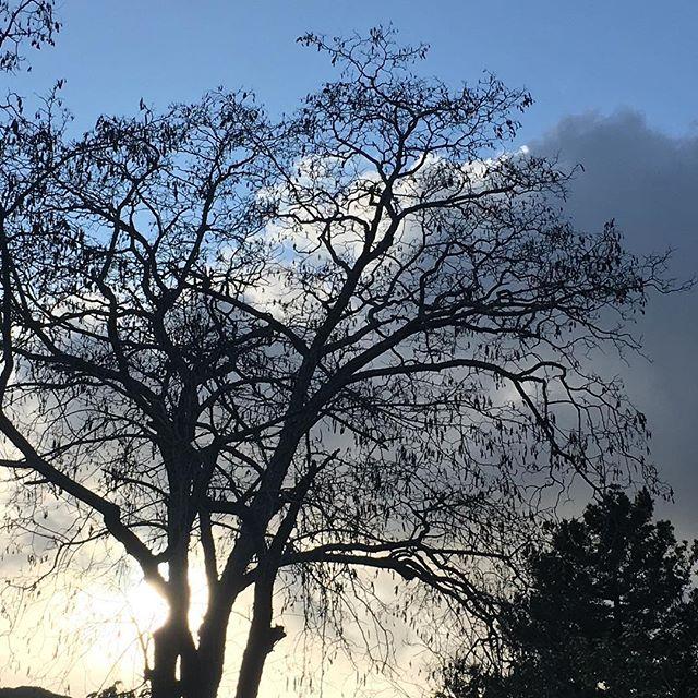 Winter beauty.  #magicmoments #potionpr