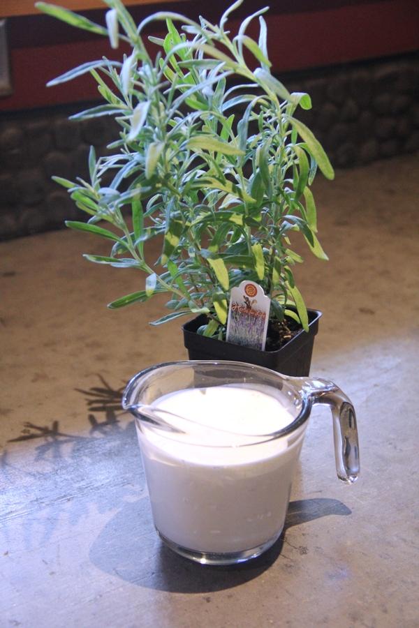 Cream and lavender