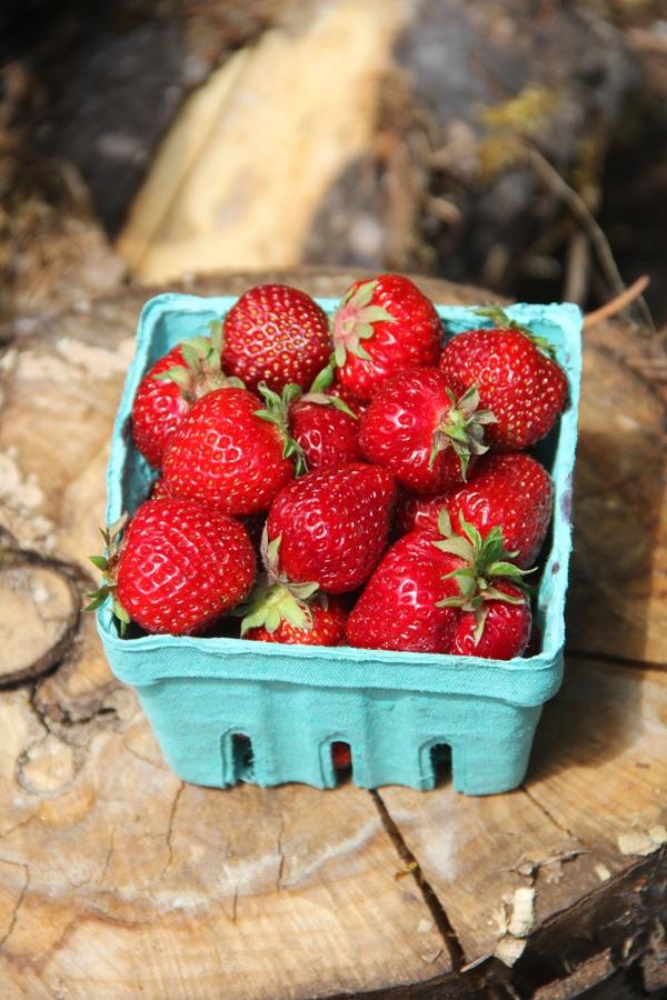 Pint of Oregon Hood Strawberries