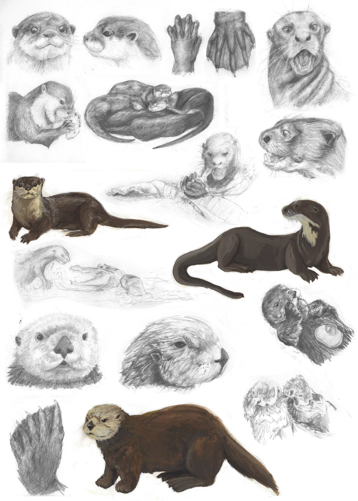otters 4 portfolio.jpg