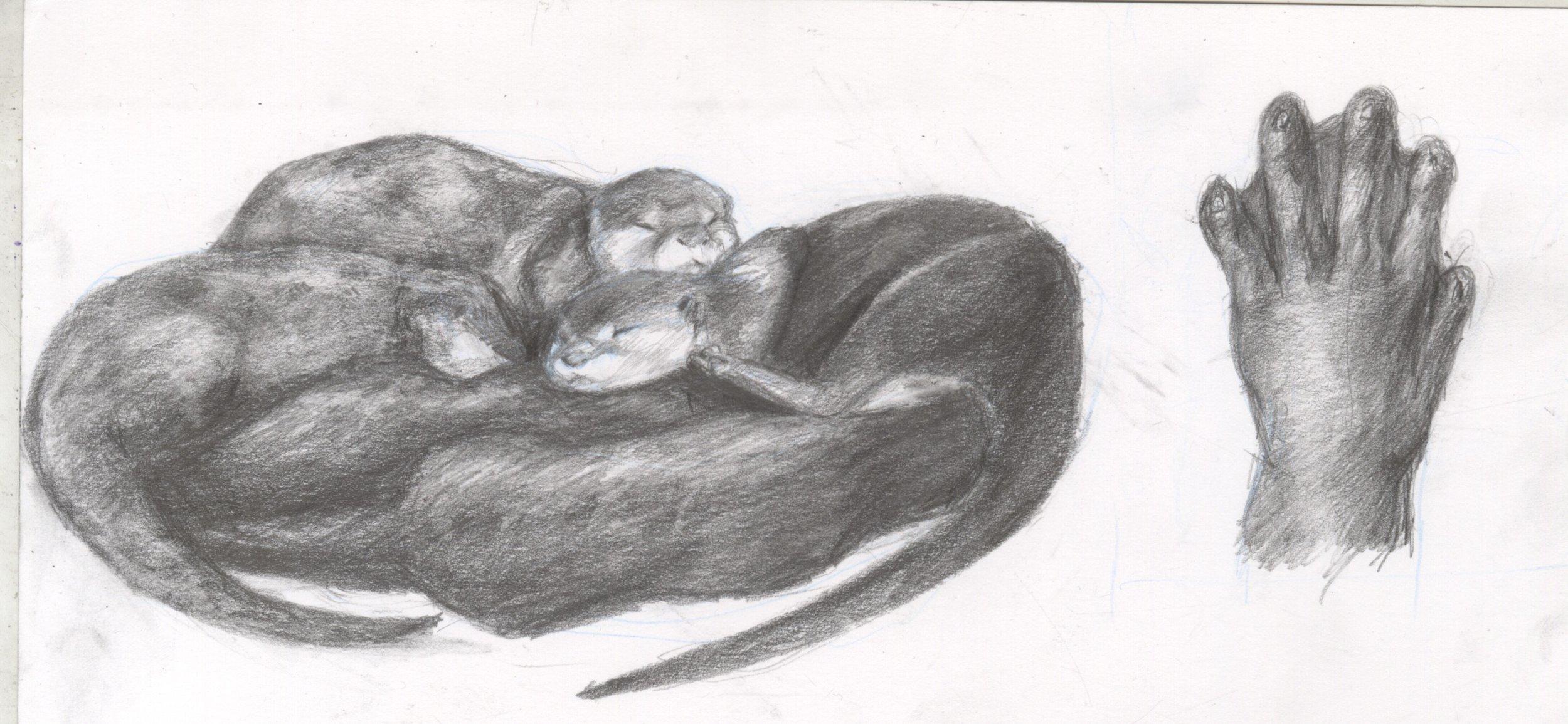 otter sketches batch 2.jpg