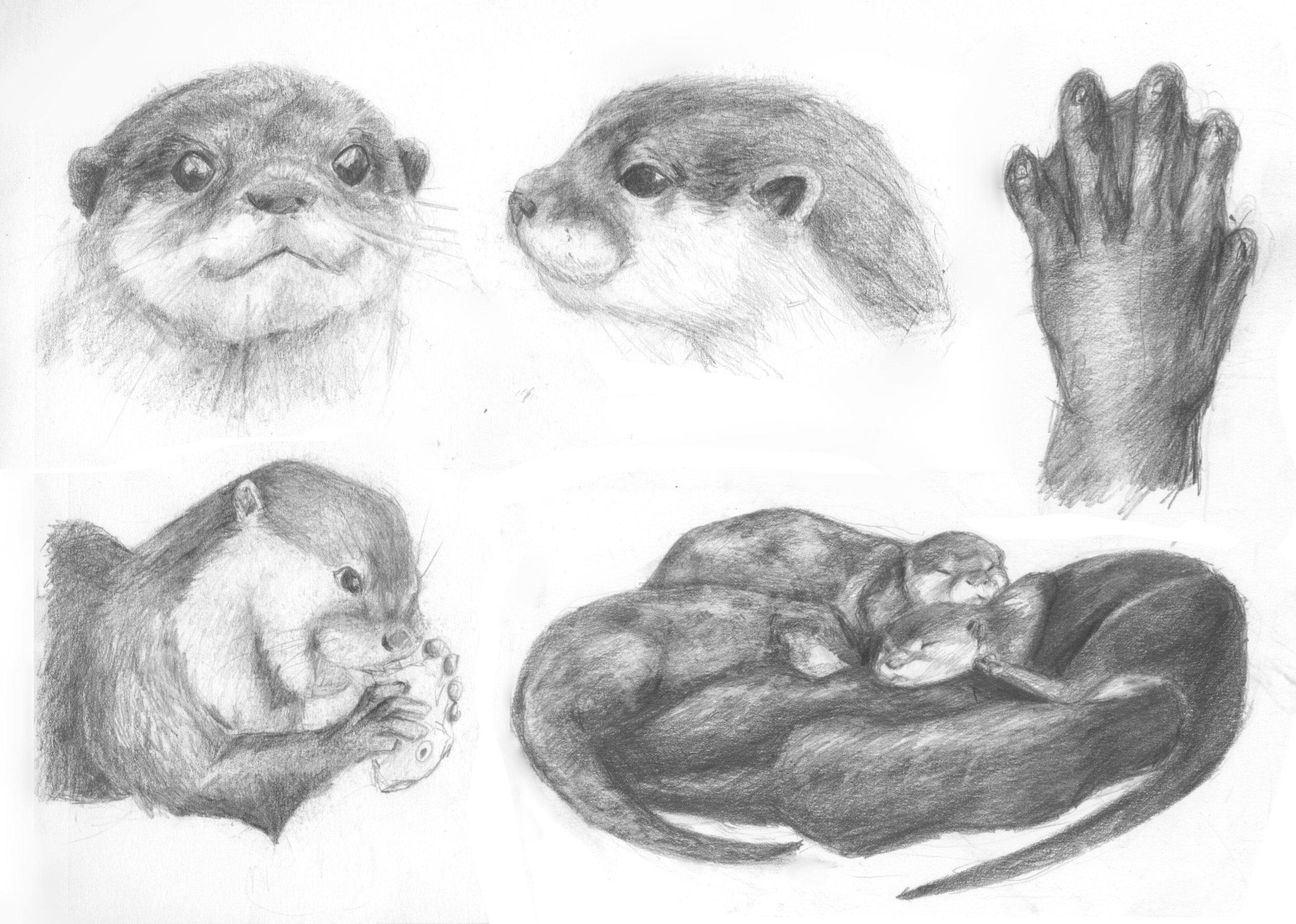 otters batch 3.jpg