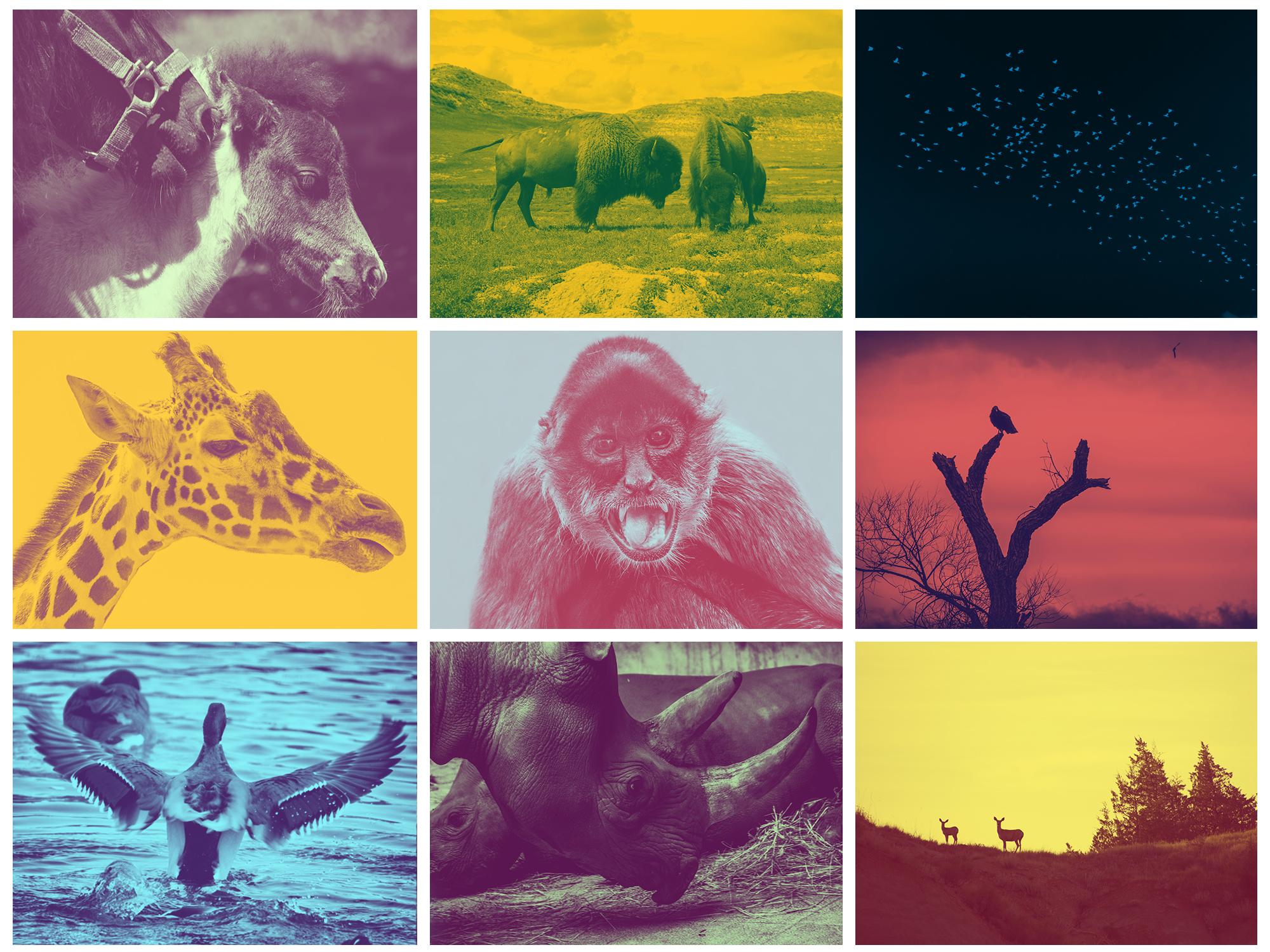 WildlifeInGrades.jpg