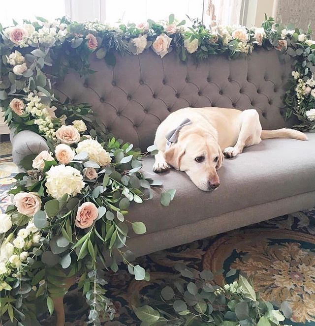 On set for photo shoot @fairmontmac for @locallovepopup Wedding event on Feb 10th.  Thanks to @nicolleemcneill for the great photo of Smudge just lounging on set. 💕🌸 Event info in previous posts. 💍#locallovepopup #localloveatthemac