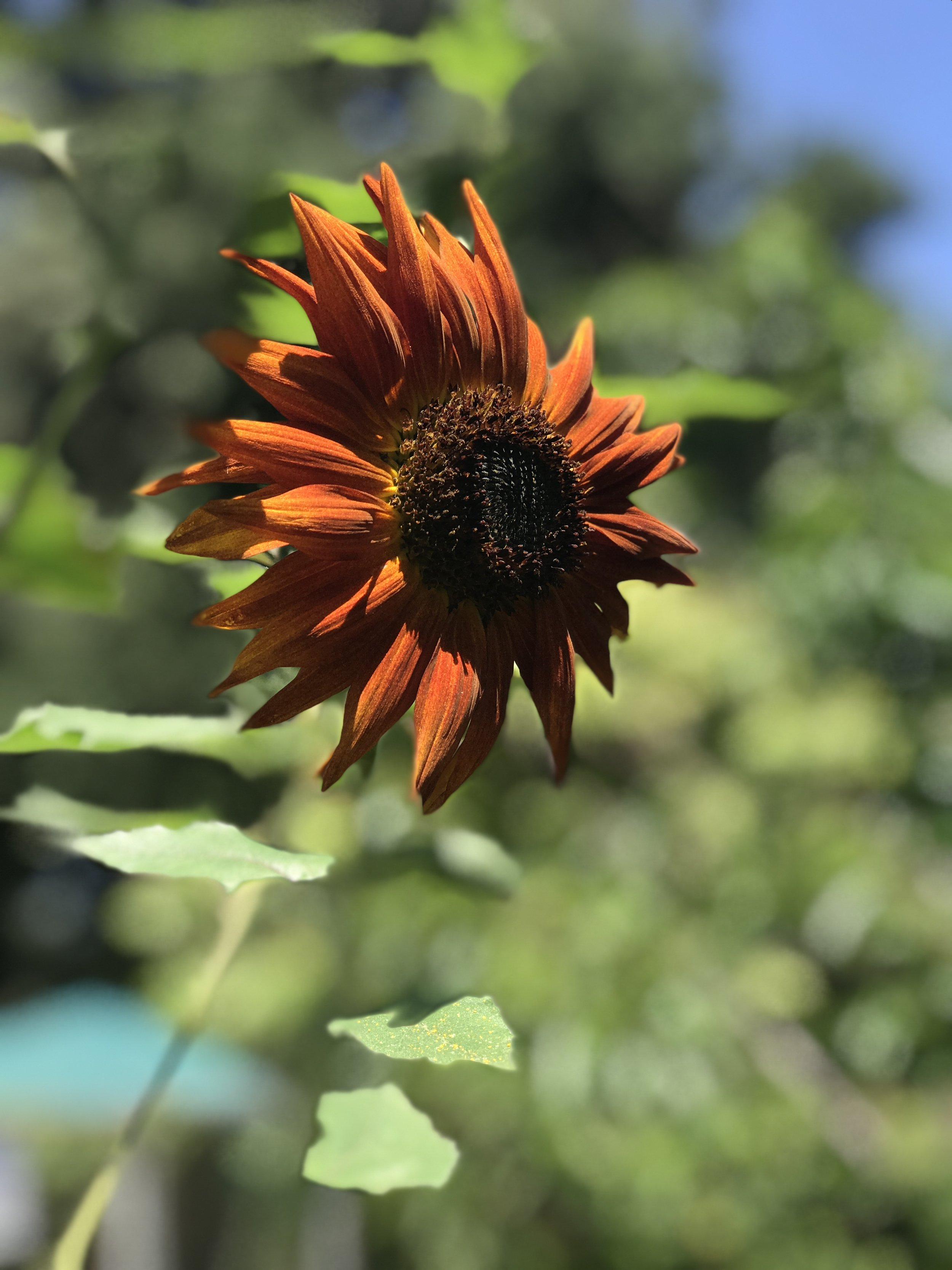 Taken by me in the Unitarian Universalist Church of Studio City Community Garden