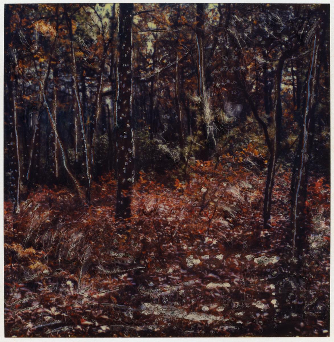 "Arthur Rosato ""Fall Forest"""