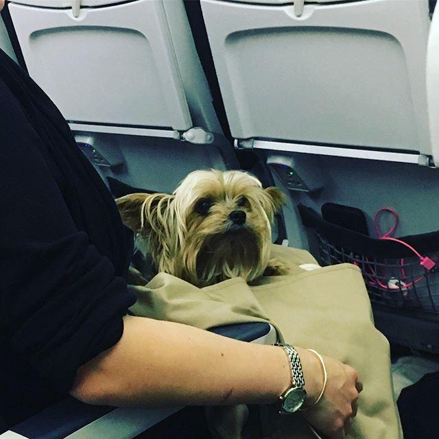 Sometimes it's the little things that make a flight... like having a friend across the aisle #planefriend #doggo #doggosdoingthings