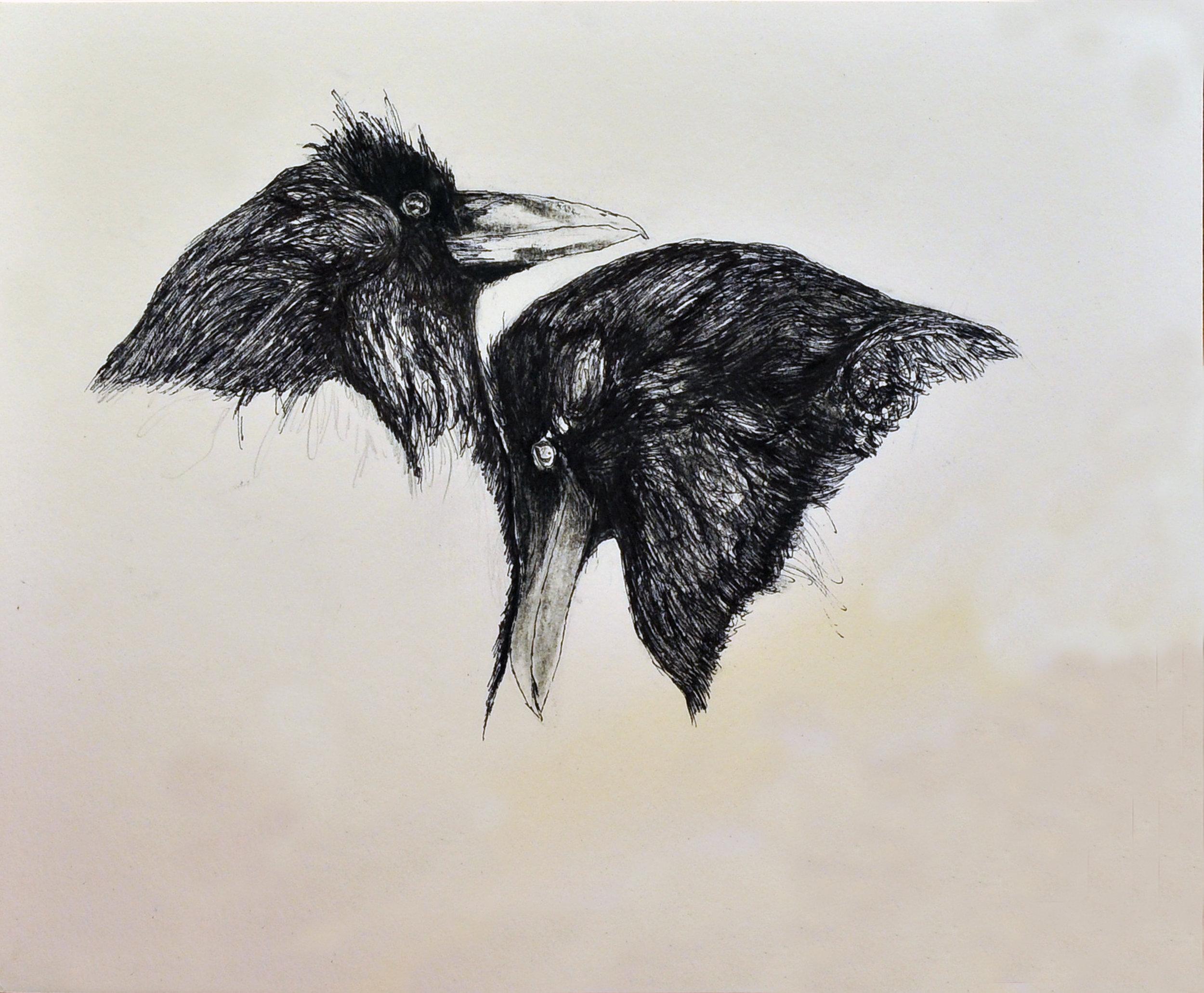Crow pair 1.jpg