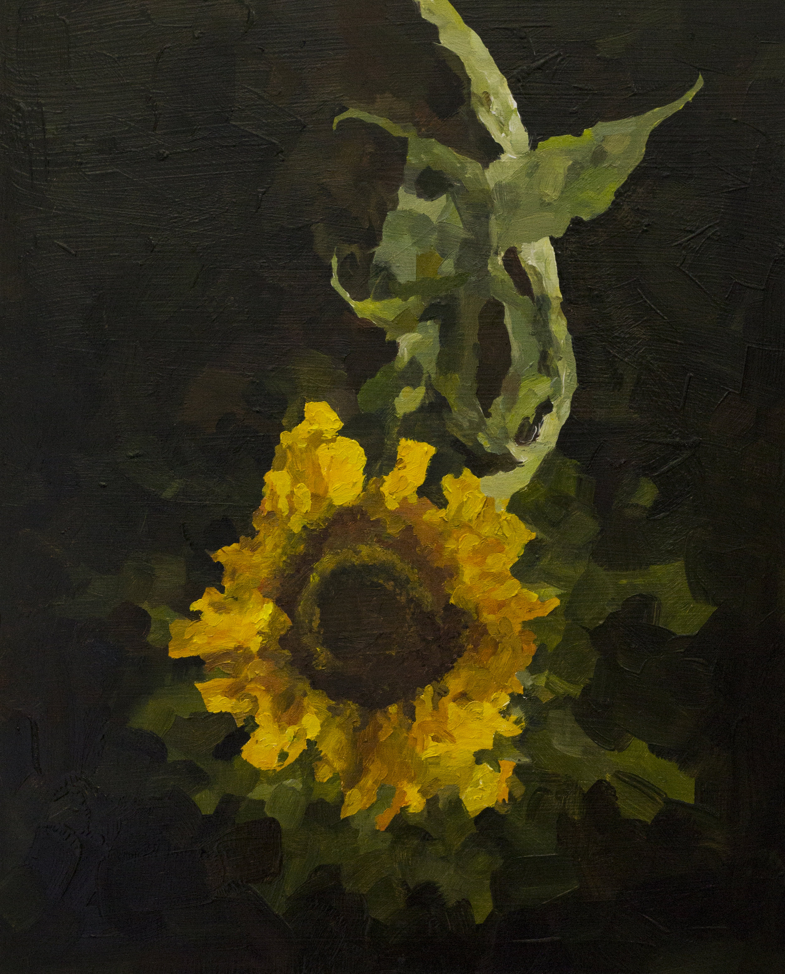 Sunflower 1.jpg