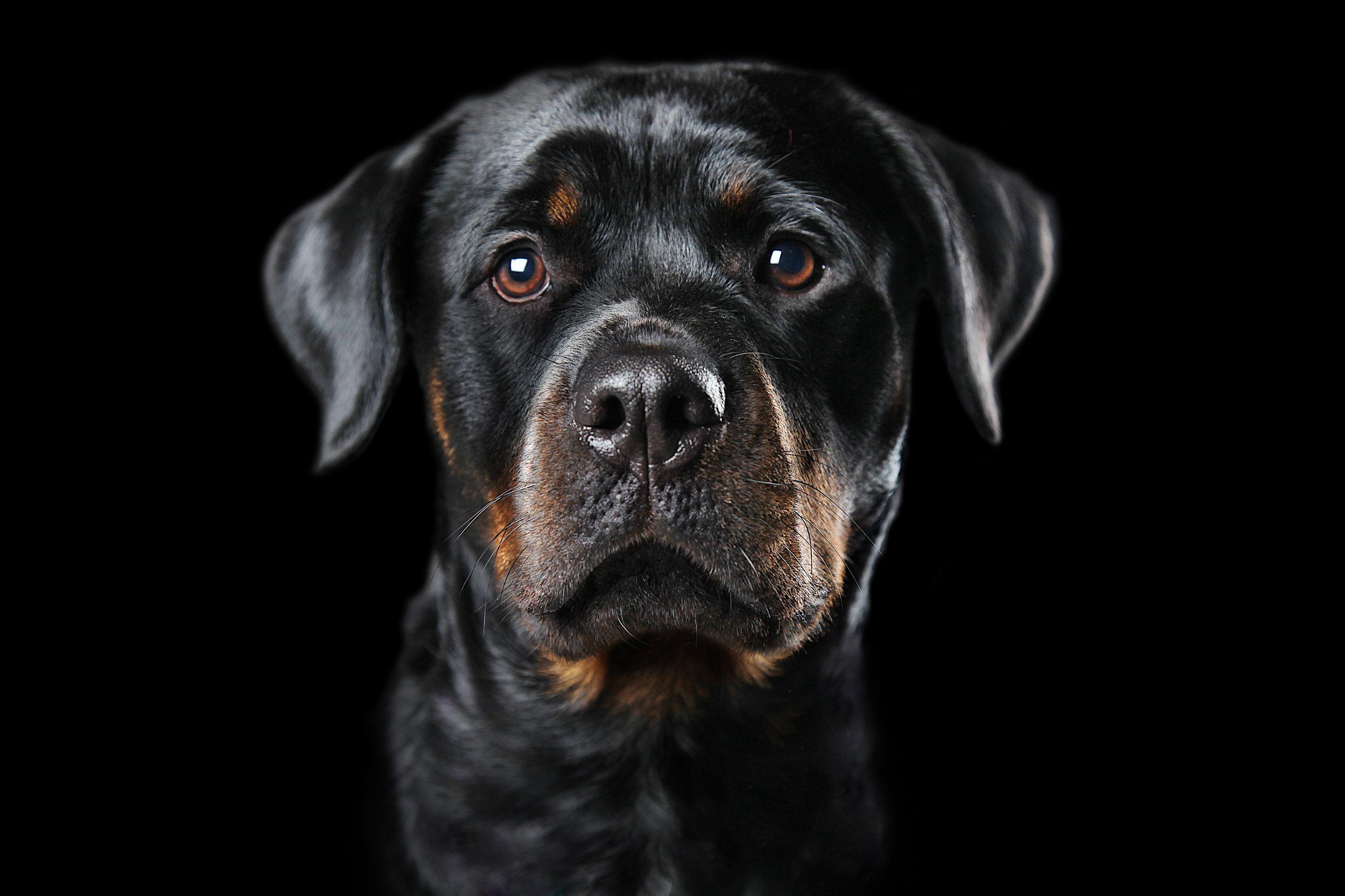 DOG ON BLACK BG RT copy 12.07.01 copy.jpg