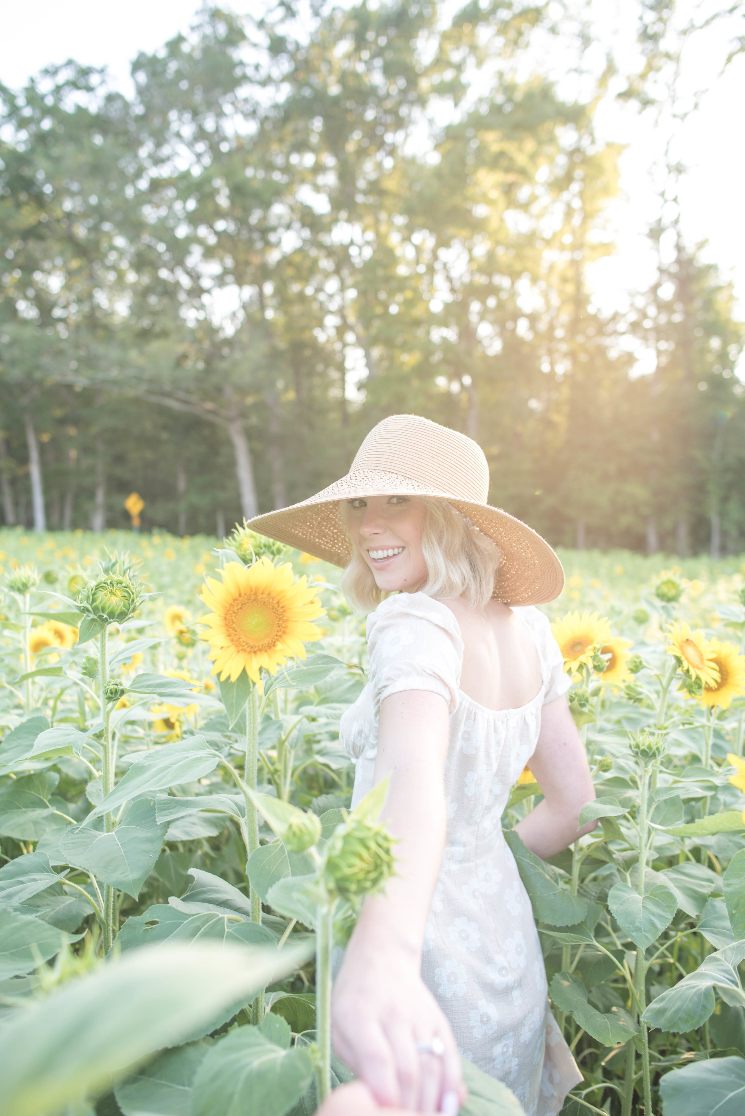 sunflower field md