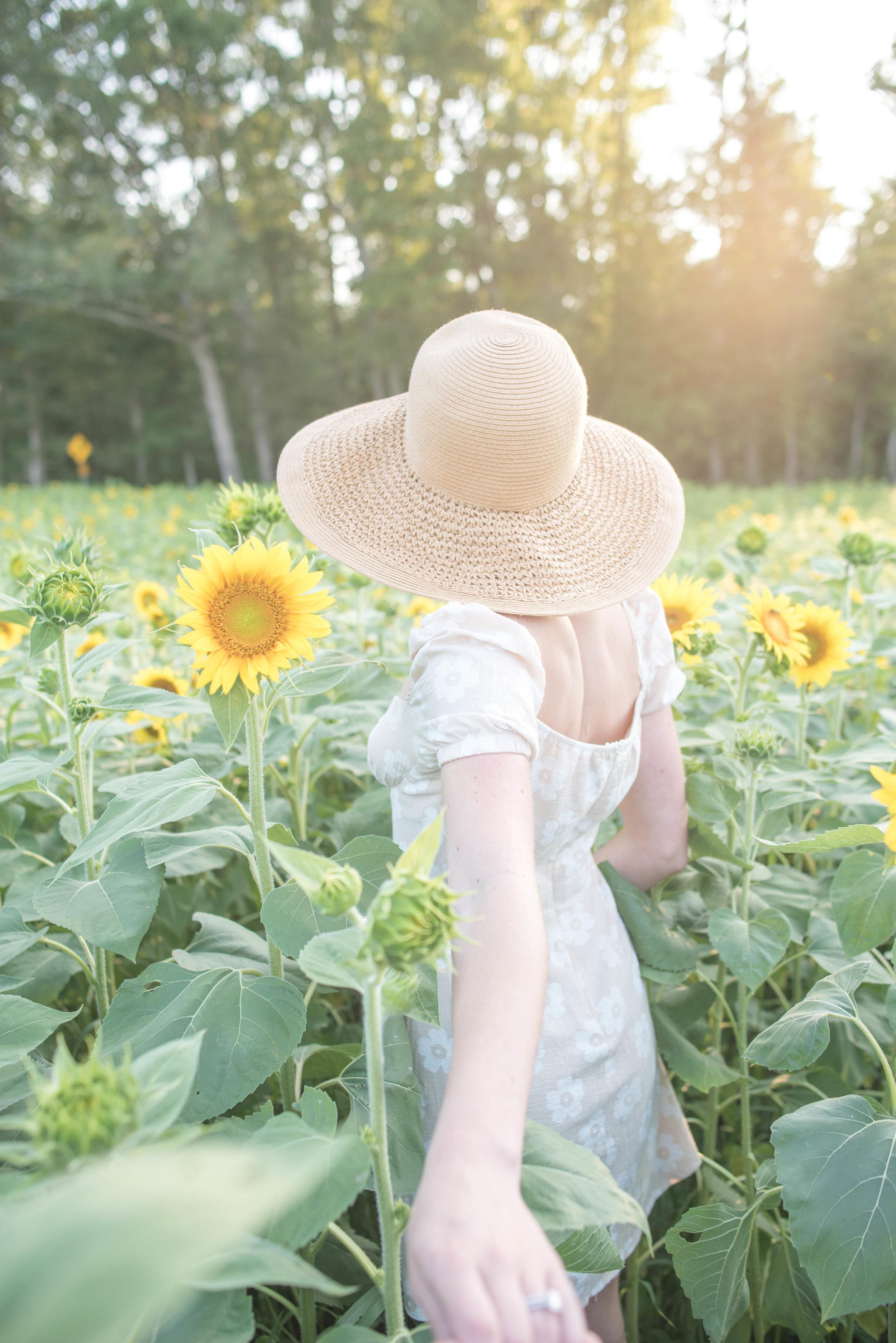 sunflower field Virginia