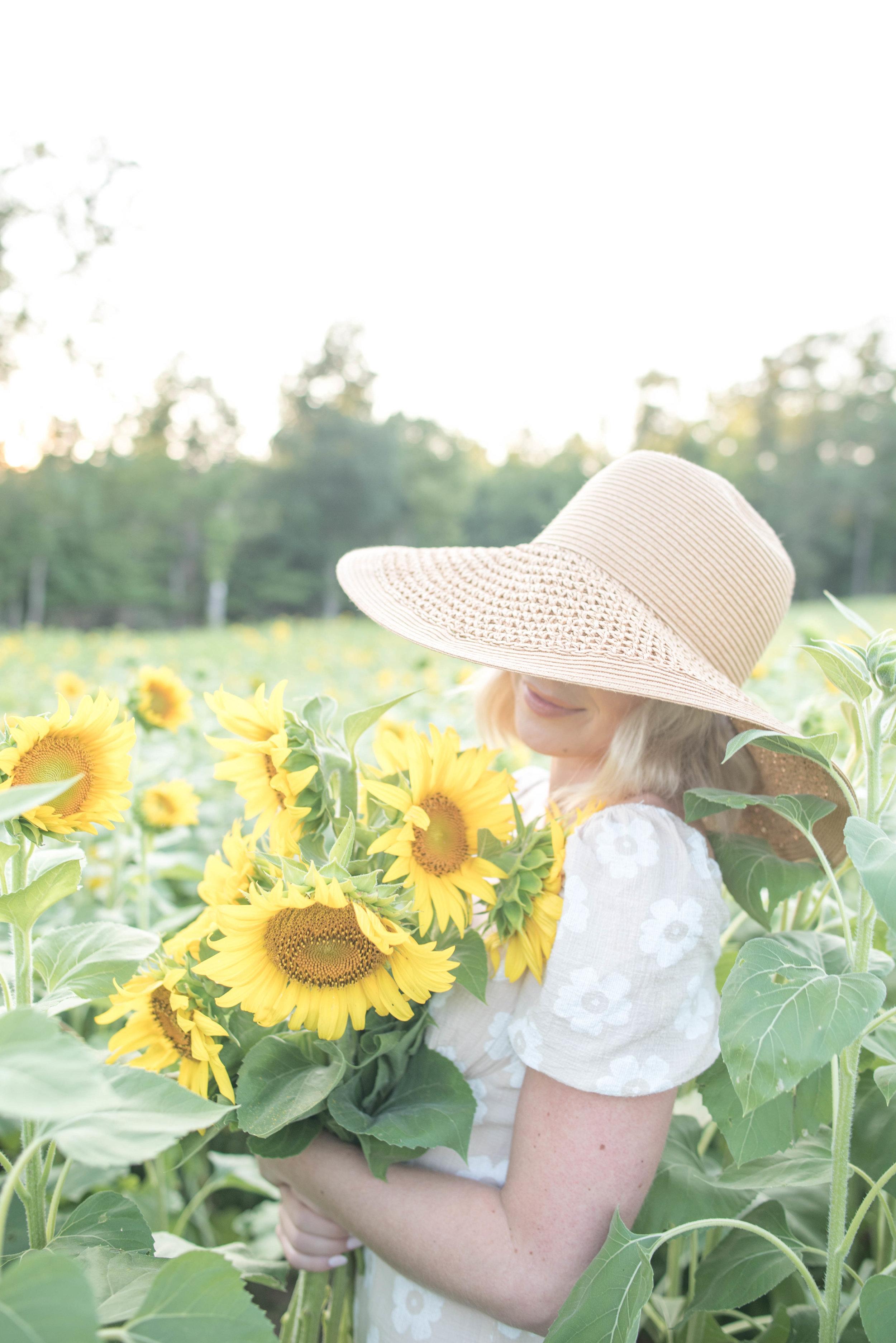 sunflower field in Williamsburg VA