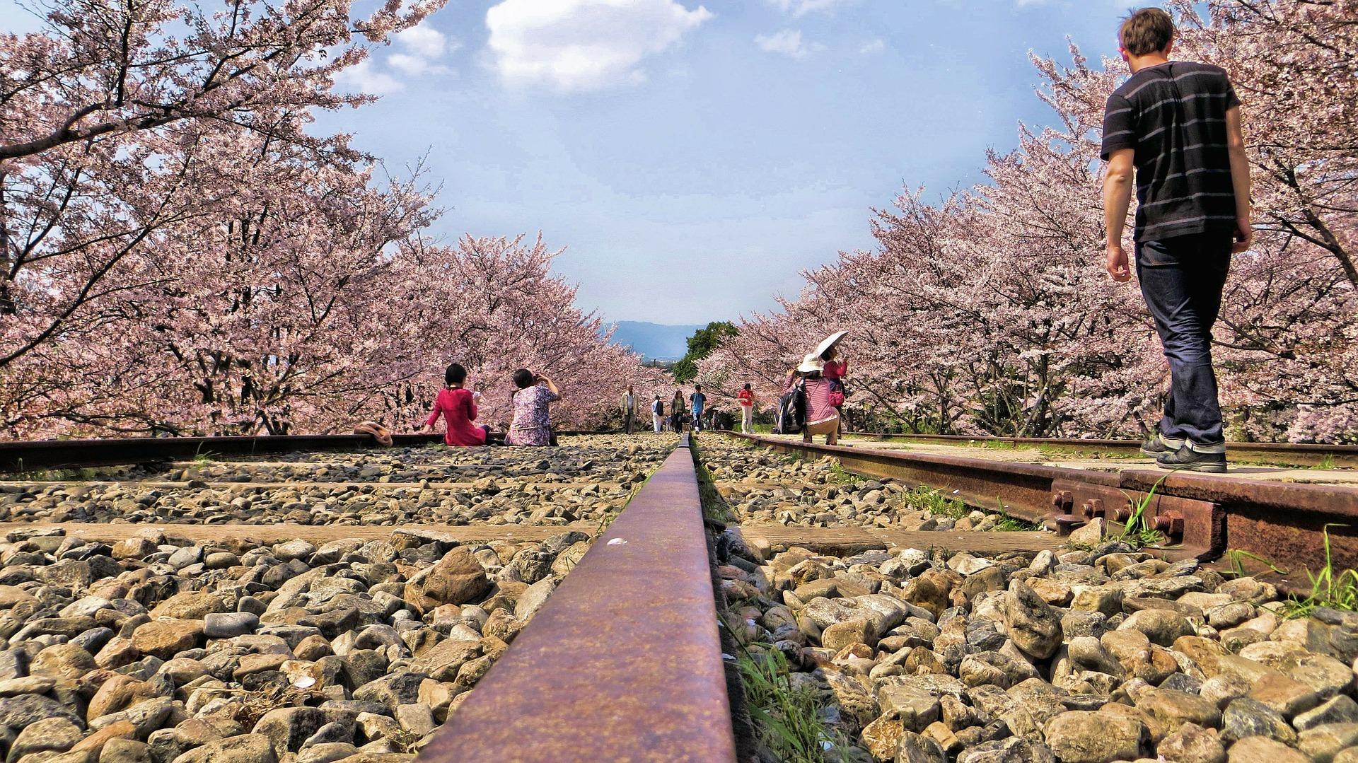 gleise-blossom.jpg