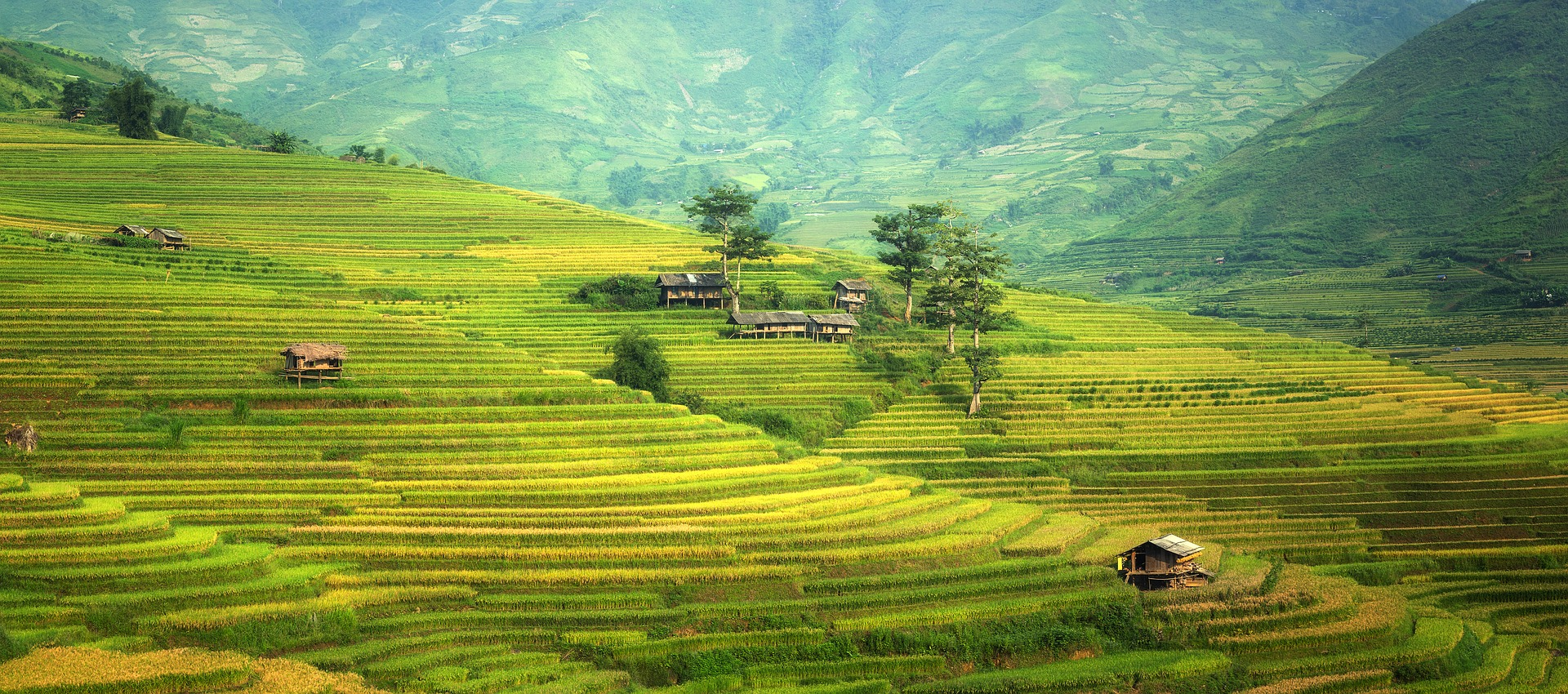 agriculture-rice.jpg