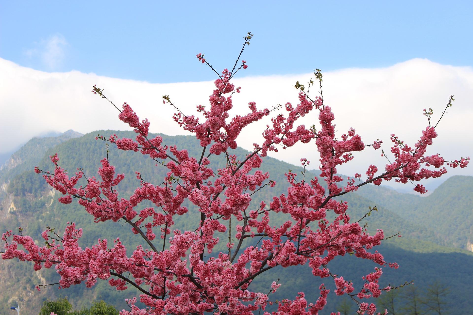 cangshan-flowers.jpg