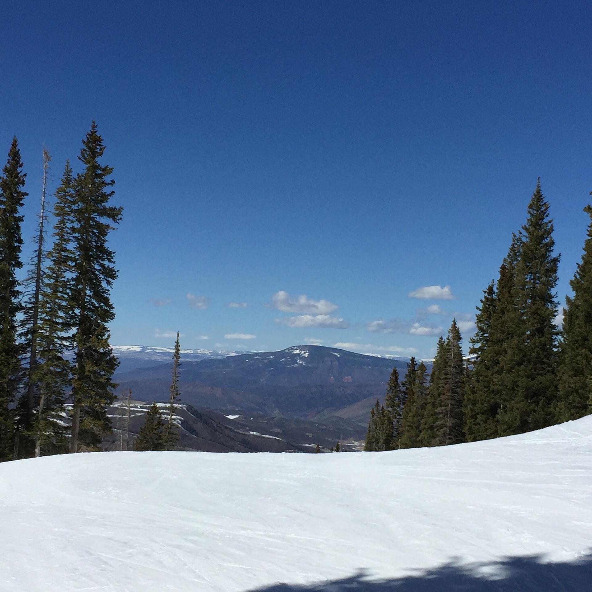 mountain-aspen.jpg