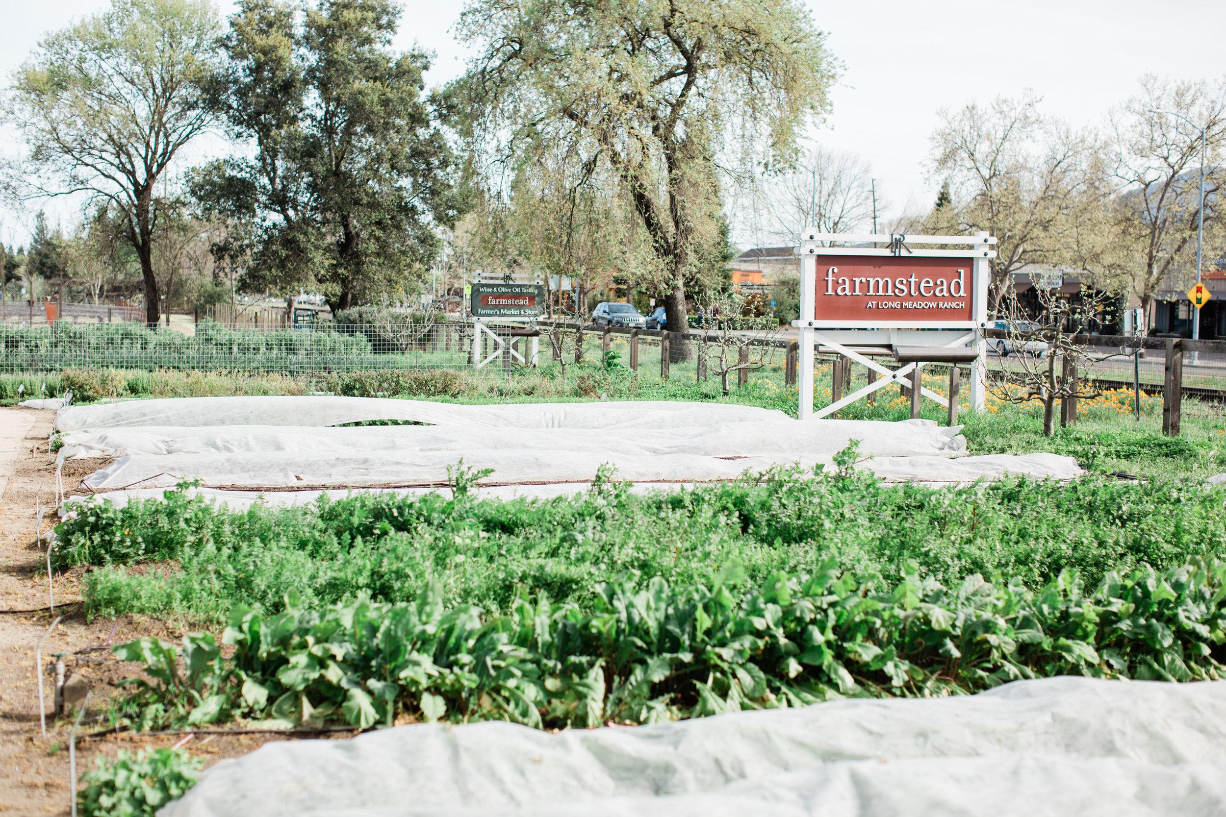 Cira&Max_Farmstead-37.jpg