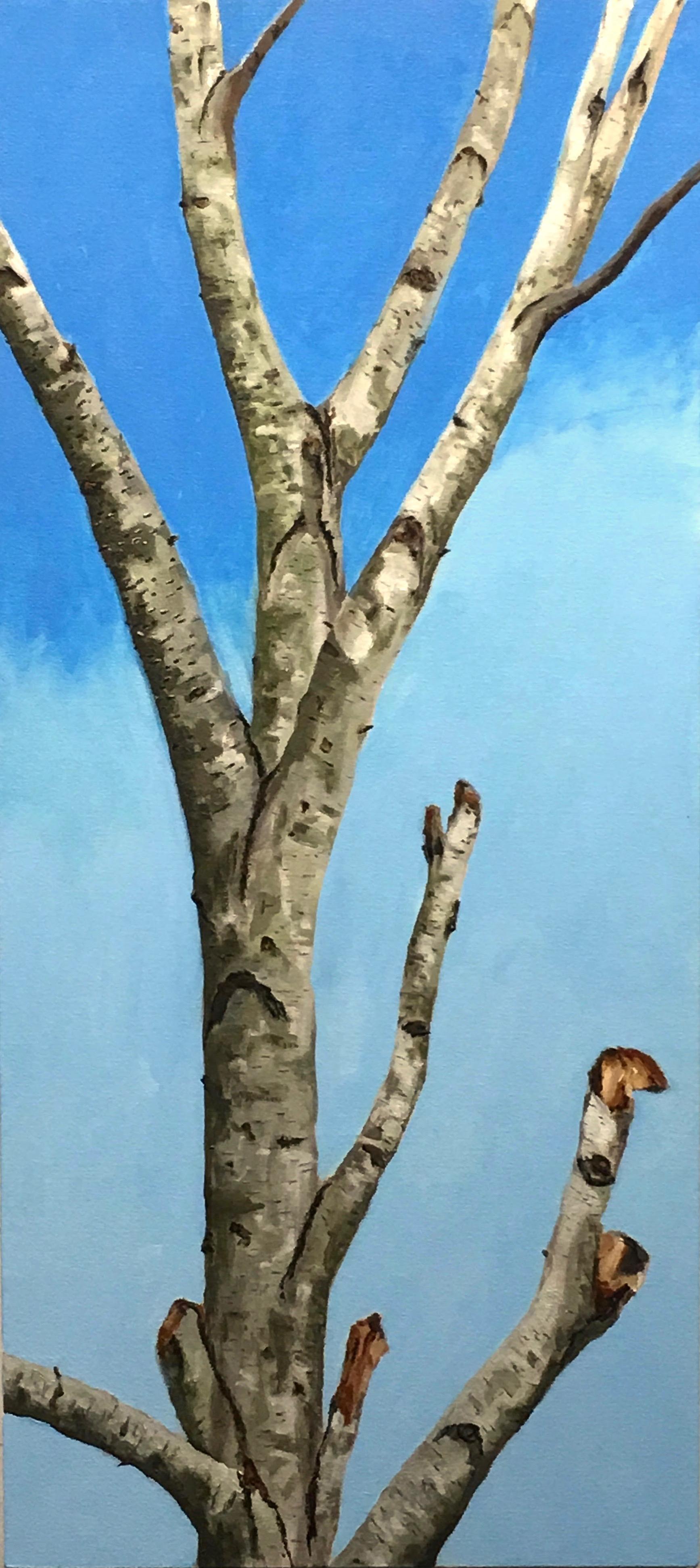 Dead Birch-Blue Sky (2019)
