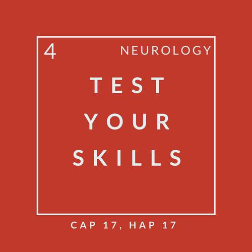 Neuro Quiz 4