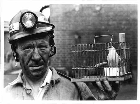 Canary In A Mine