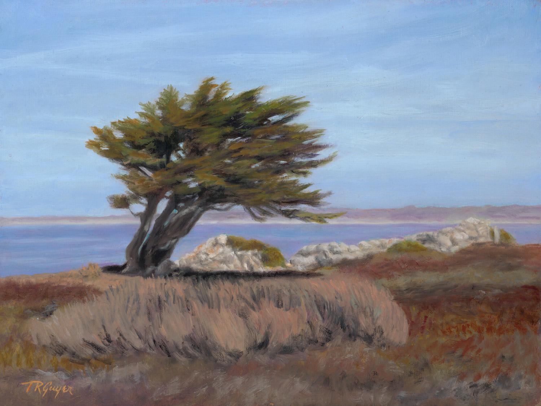 """ Monterey Cypress ""   9x12"" oil on linen  over wood panel"