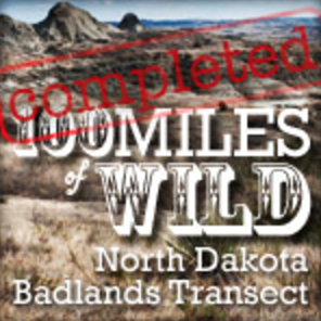 """100 Miles of Wild: North Dakota Badlands Transect   [ Spring 2013 ]  The 100 Miles of Wild project has a simple aim: discover first-hand the condition of the """"wilderness"""" that inspired Roosevelt's effort to preserve wilderness for all Americans and the World. The goal is to travel on foot to seldom-visited, isolated places within the Badlands. The Badlands (once referred to as """"Hell with the fires gone out"""") seem an unlikely place for a trip on foot, and that is precisely why the team undertook this project."""