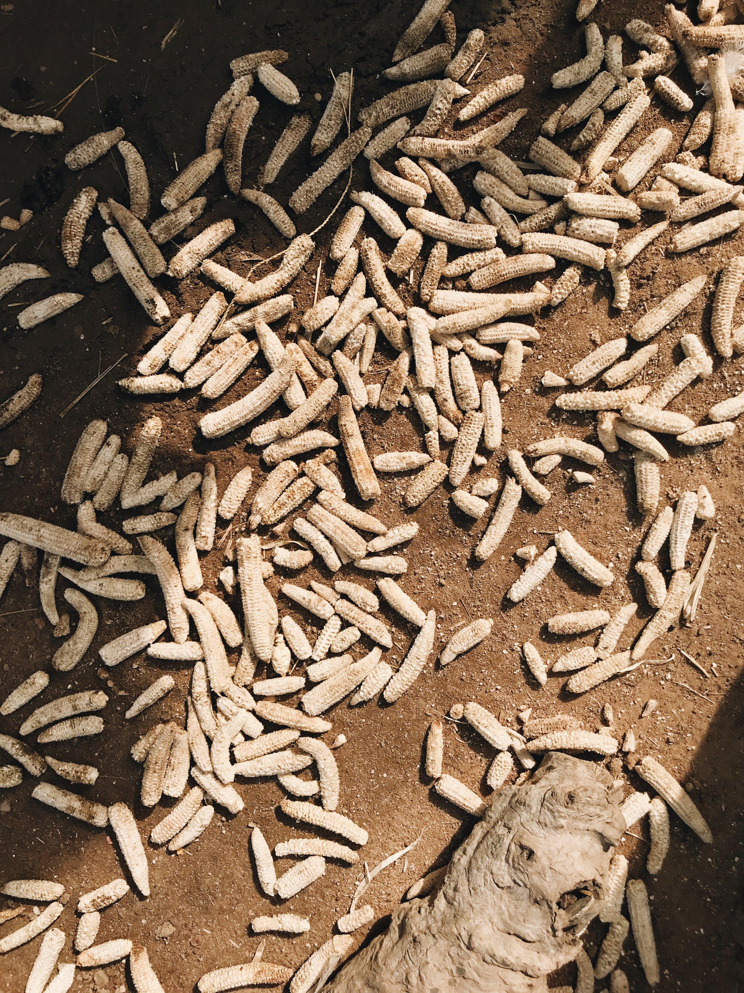AAKS NATURAL RAFFIA MADE IN AFRICA CB4D478-7393-4234-8973-C879993D6263.jpg