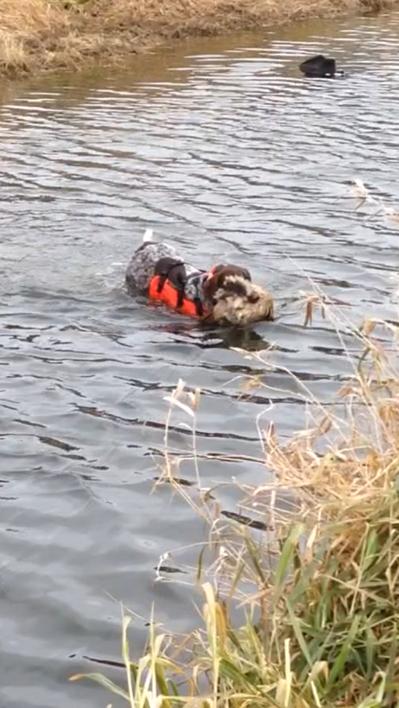Frankie Water Retrieve