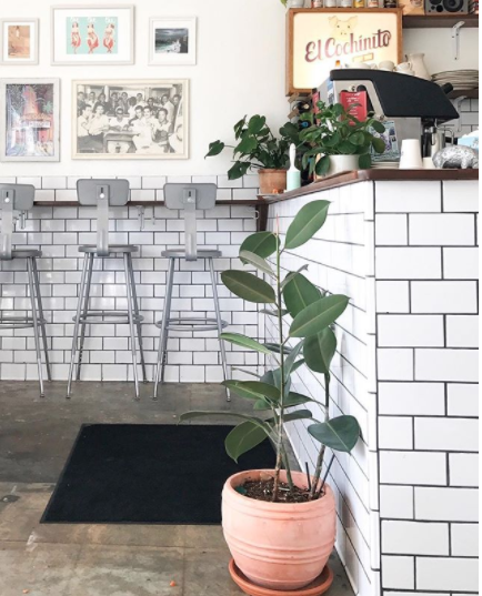 4. El Cochinito  A Ghost Media favorite, El Cochinito provides a modest but trendy interior space with it's white subway tile, neon signs, and leafy greens. Knock out two birds with one stone by heading to this spot for some delicious cuban food and a quality instagram post.
