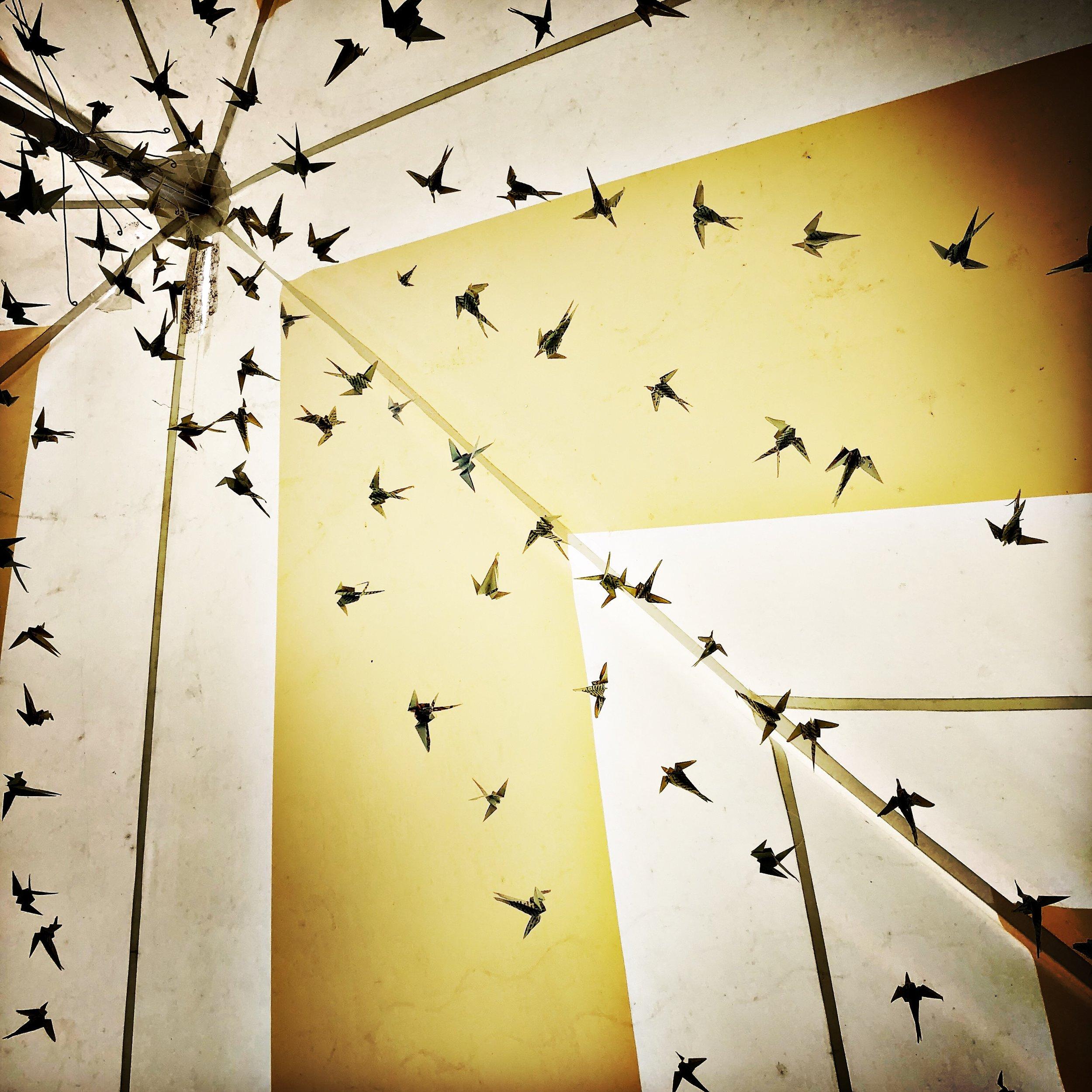 birdshot2.jpeg