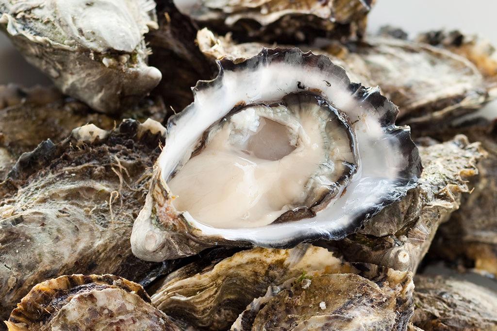 1024x682-Oysters-01.jpg