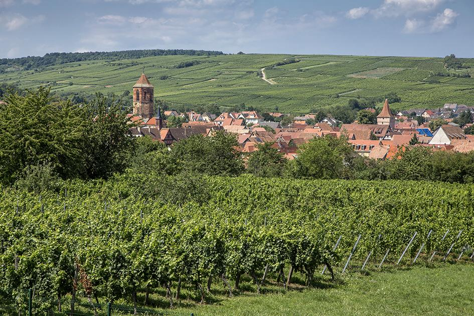 Domaine Bliemerose vineyards right outside the town of Rosheim in the Alsace region