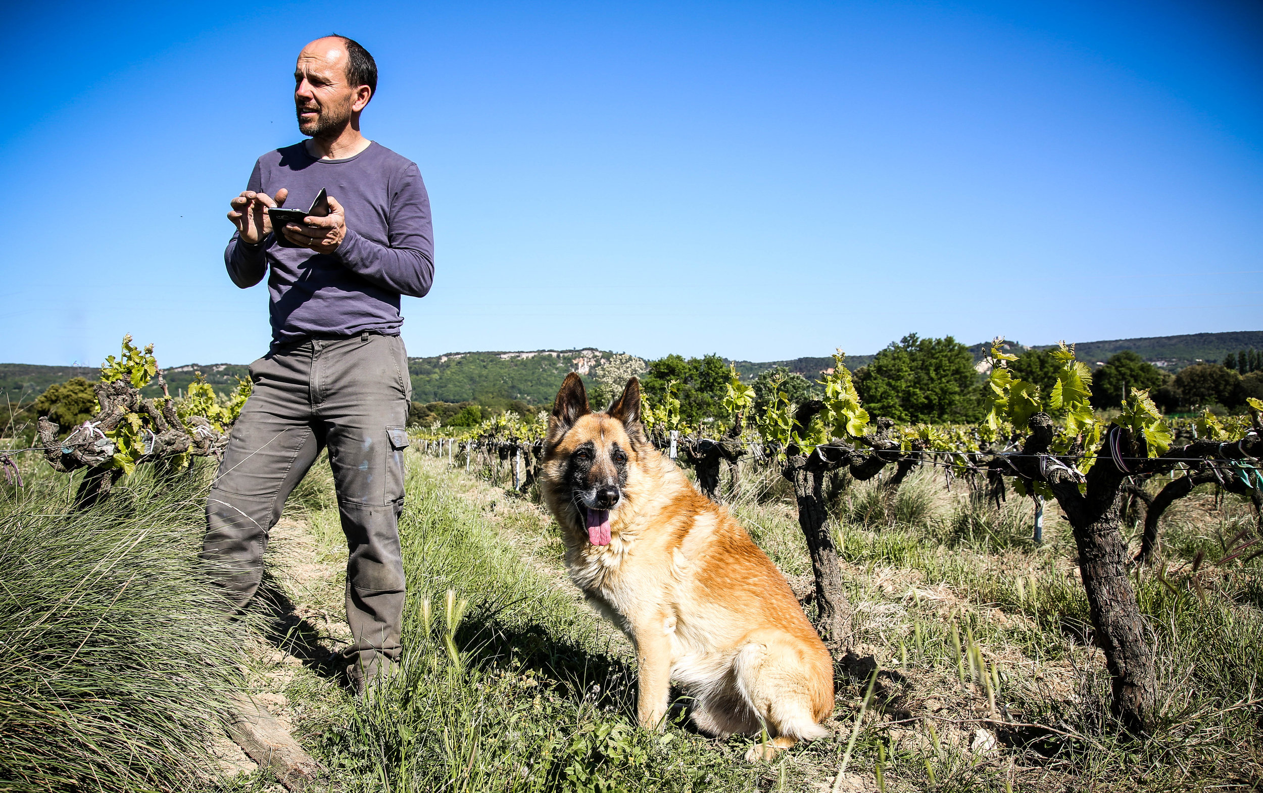Vigneron, Philippe Fabrol with his trusty helper among the vines