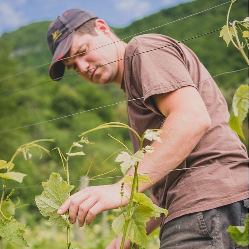 Vigneron, Matthieu Goury, tending to his vines