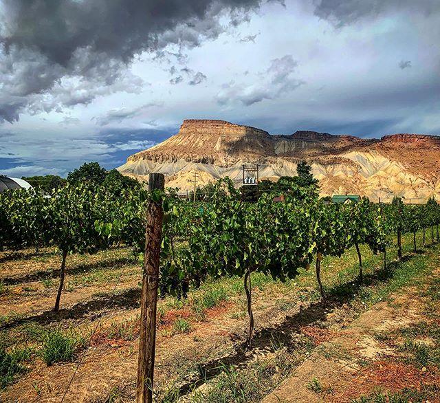 Colorado wine tasting on the western slope.