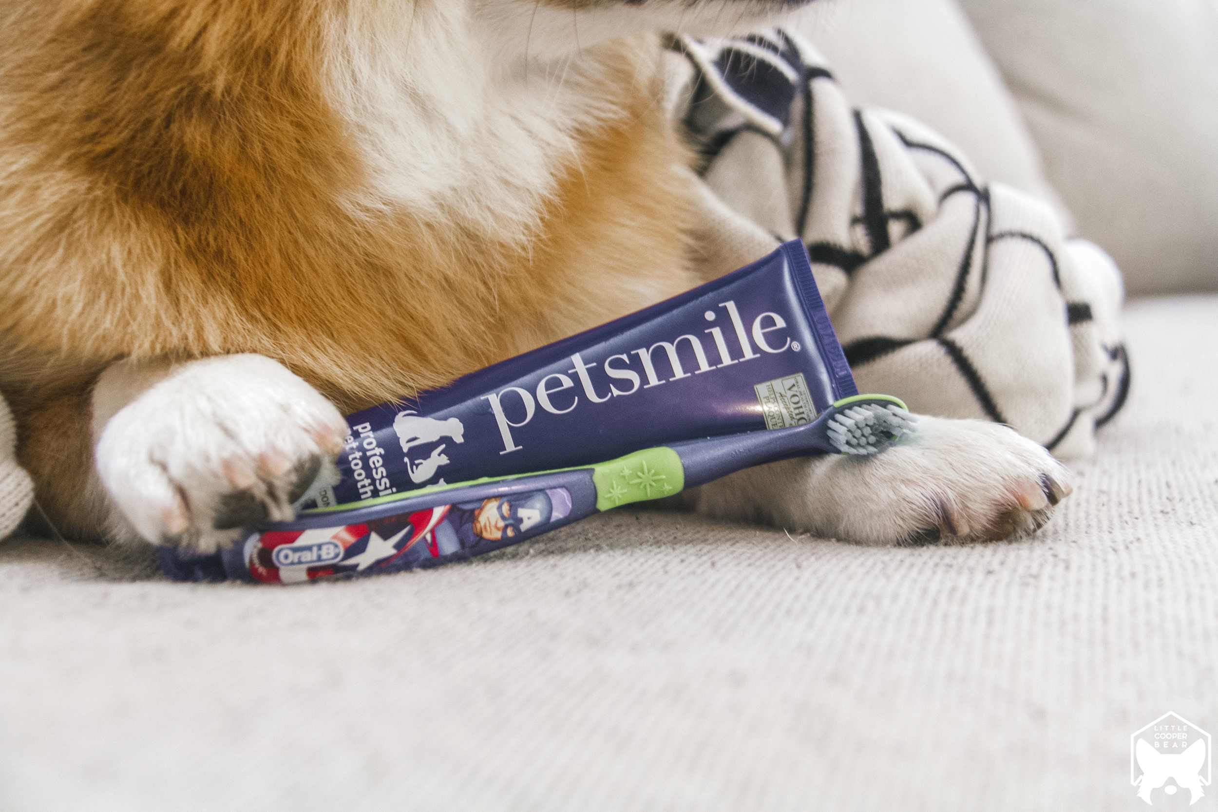 Cooper with his current tooth brushing products.PetSmile toothpaste has the seal of approval from the VOHC.