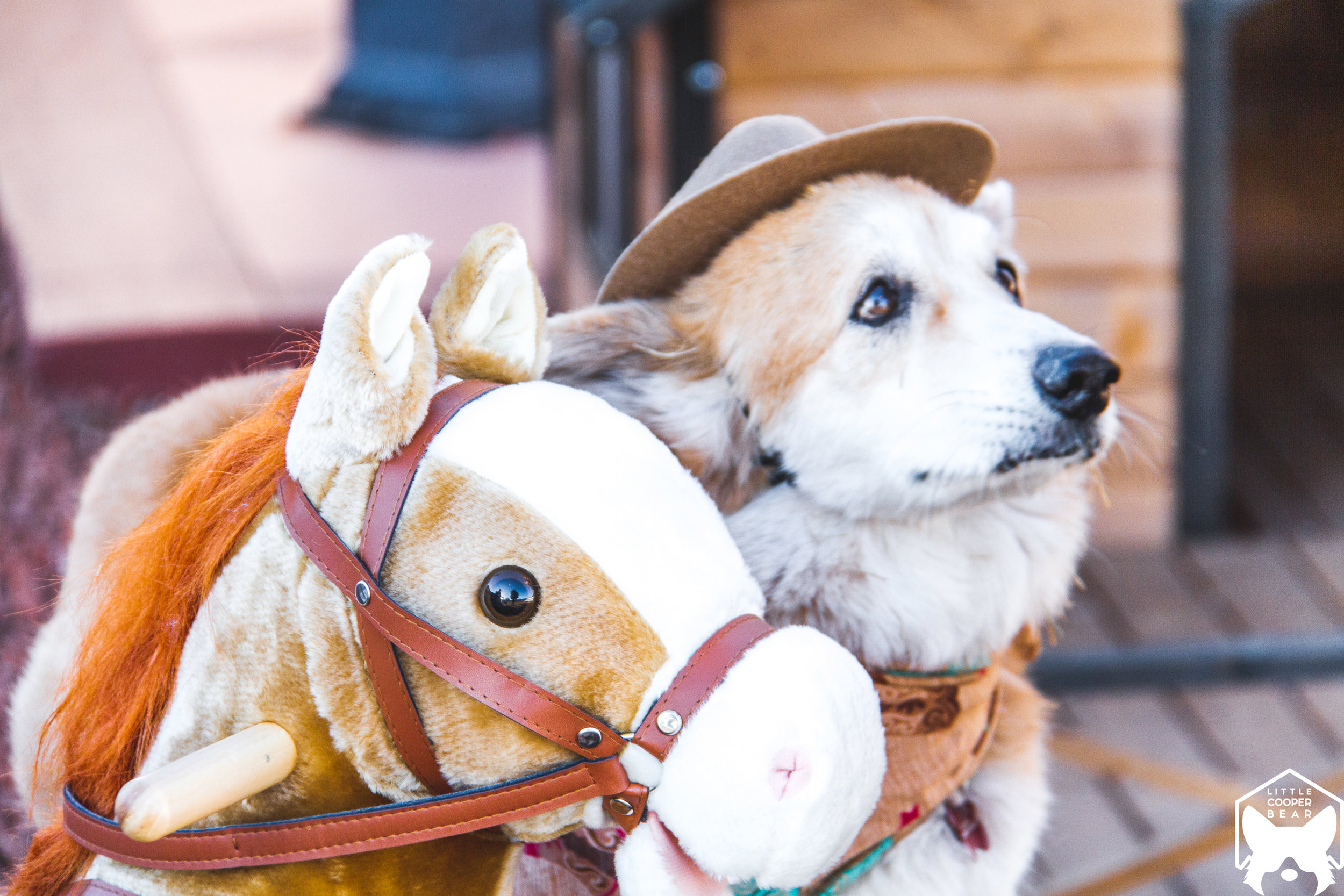 Cowboy and his trusty steed.