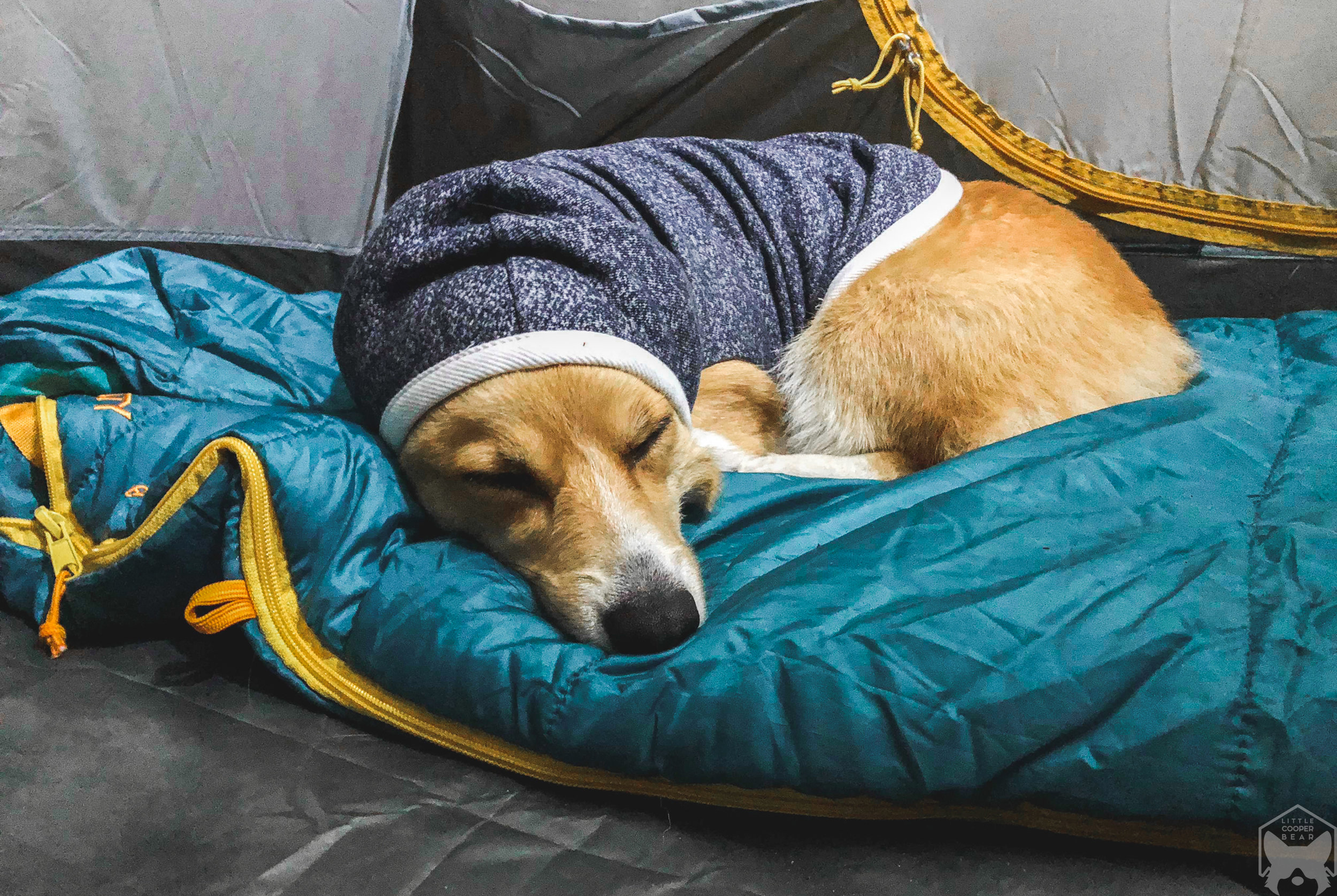 Bundled up for the night.