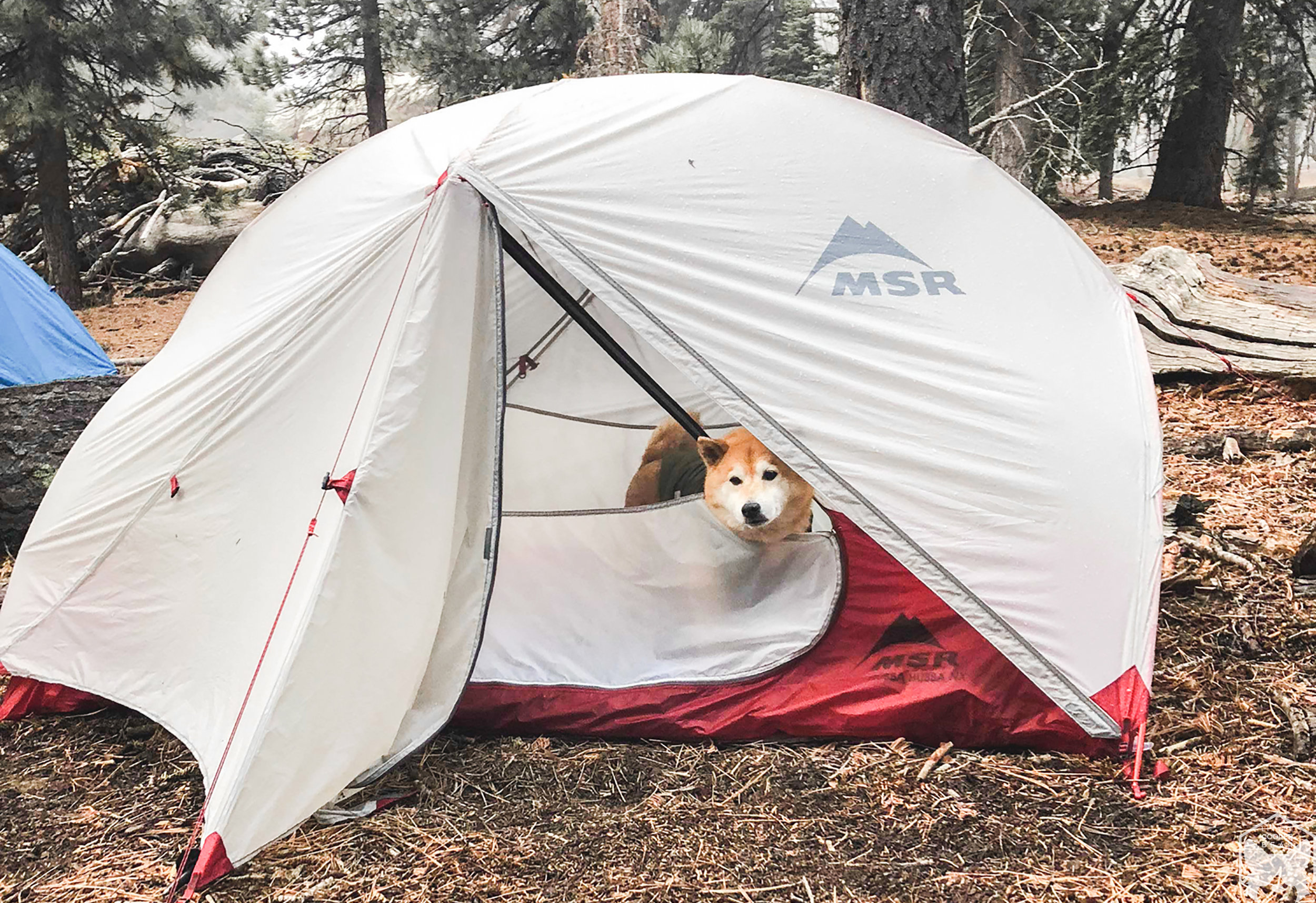 Hoku  decided he'll just stay in the tent.