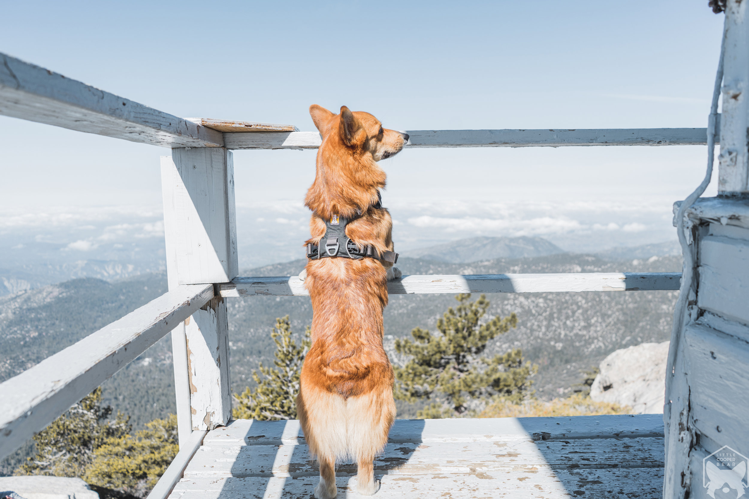 Keeping a good lookout!
